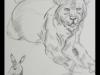 animal_study