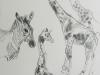 animal_study1