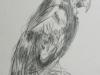 bird_study_pencil1