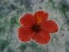 flower_study_dry_pastels