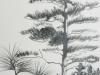 tree_study